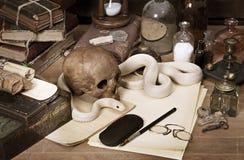 Texas rat snake Royalty Free Stock Photo