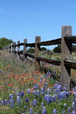 Texas split rail fence in Spring. A split rail wooden fence surrounded by bluebonnets and Indian paintbrushes Royalty Free Stock Photography