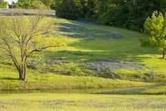 Texas Spring Flowers Reflecting rural sur un étang Photos stock