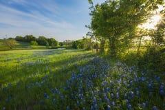 Texas Spring Flowers Reflecting rural sur un étang Photo stock