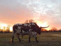 Texas Strong 2 Imagen de archivo