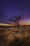 Texas Sunrise. Sunrise over a field in Texas Stock Photos