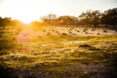 Texas Sunset by a field of Fire Ants. Royalty Free Stock Images