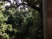 Texas Trees Foto de Stock Royalty Free