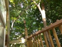 Texas Trees en casa del árbol Imagenes de archivo
