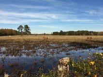 Texas Views do leste Fotos de Stock Royalty Free
