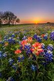 Texas vildblomma - fält för bluebonnet och för indisk målarpensel på solnedgången Royaltyfri Fotografi
