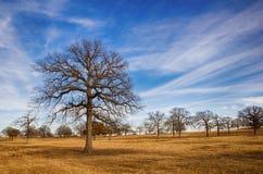 Texas vinterhimmel Fotografering för Bildbyråer