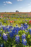 Texas wildflower -  bluebonnet and indian paintbrush filed in spring Royalty Free Stock Photos
