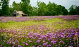 Texas Wildflower Field y granero Fotos de archivo