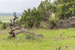 Texas Wildflowers en Willow City Loop Fotografía de archivo