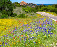 Texas Wildflowers Enchanted Rock Photo libre de droits