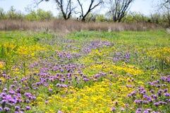 Texas Wildflowers fält i naturen royaltyfri bild