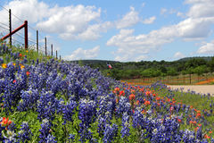 Texas wildflowers. Wildflowers including bluebonnets and Indian paintbrushes cover a field in front of a flying Texas flag stock photos