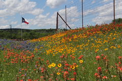 Texas wildflowers. Wildflowers including bluebonnets and Indian paintbrushes cover a field in front of a flying Texas flag royalty free stock image