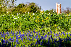 Texas Wildflowers and Water Tank. Royalty Free Stock Photos