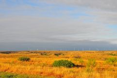 Texas Windmills with Blue Sky and Golden Waves of Native Grasses. S Royalty Free Stock Images