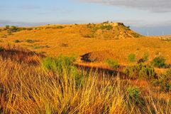 Texas Windmills with Blue Sky and Golden Waves of Native Grasses. S Royalty Free Stock Photography