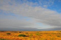 Texas Windmills con el cielo azul y las ondas de oro de hierbas nativas imágenes de archivo libres de regalías