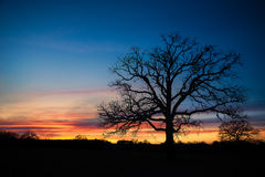 Texas winter sunset Royalty Free Stock Image