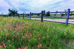 Texas Wooden Fence y Wildflowers viejos imagen de archivo