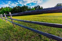 Texas Wooden Rail Fence idoso com um campo salpicado com Texas fotografia de stock