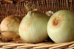 Texas Yellow Onions. Three Texas Yellow Onions in Basket Stock Photos