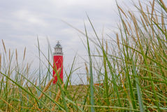 Texel lighthouse. Tesel lighthouse with grass in front royalty free stock photography