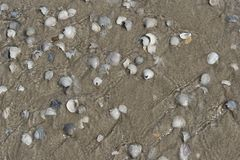 Texel shell on the beach stock image