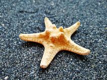 Texrure yellow starfish on black sea sand royalty free stock images