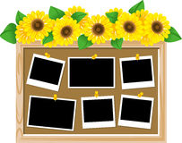 Text board of the sunflower Stock Image