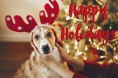 Text boas festas, cumprimentos das estações, Feliz Natal e happ fotografia de stock