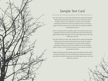 Text card nature tree Stock Photos