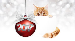 2017 text cat with card and red christmas ball with ribbon Stock Photography