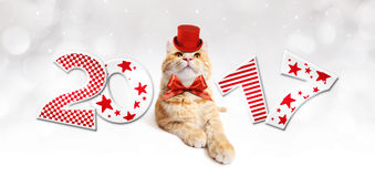 Text 2017 with Christmas magic cat. Text 2017 with Christmas magic ginger fun cat Stock Photography