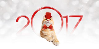 Text 2017 with Christmas magic cat Royalty Free Stock Photography
