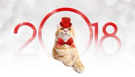 Text 2018 Christmas magic ginger cat with red hat Stock Images