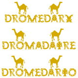 Text dromedary in 3 languages Royalty Free Stock Photo
