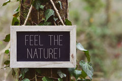Text feel the nature in a tree Royalty Free Stock Photography