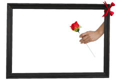 Text frame with rose Royalty Free Stock Photos