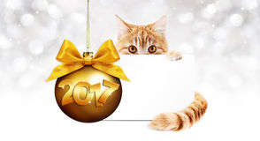 2017 text ginger cat with card and golden christmas ball with ri Royalty Free Stock Image