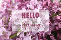 Text Hello Spring and blossoming lilac flowers. On background royalty free stock photography
