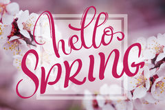 Text Hello Spring. Calligraphy lettering and Beautiful branch of a blossoming tree on background Royalty Free Stock Photos