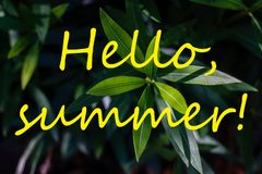 Text HELLO SUMMER and fresh tropical leaves on background stock images