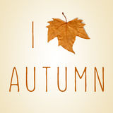 Text I love autumn with a dry leaf instead of a heart Stock Image
