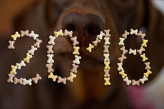 Text of numbers 2018 of dog cookies in bone shape. Symbol of new year 2018. Dachshund nose background Stock Photo