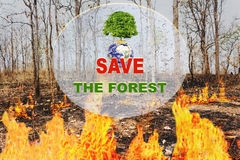 Text save the forest and tree on earth with background of wildfi Stock Photo