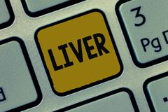Text sign showing Liver. Conceptual photo Large lobed glandular organ in the abdomen of vertebrates Produce bile.  royalty free stock photo