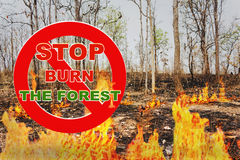 Text stop burn the forest on red stop sign with background of bu Stock Photography
