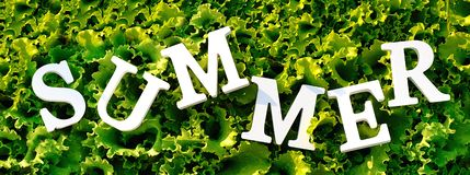 Text Summer from white letters on curly green lettuce. Concept summer diet, detox time, healthy food. Top view Banner.  stock photography